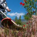 コスパ優秀な草刈り機(刈払機)をAmazon・楽天・価格.comよりプロショップスタッフが厳選